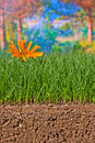 Newly sown grass seed showing roots in the soil earth Royalty Free Stock Photo