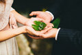 Newlyweds hold wedding rings to hands on the green leaf Royalty Free Stock Photo