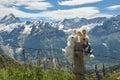 Newlyweds on honeymoon in Switzerland