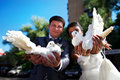 Newlyweds with pigeons in his hands Royalty Free Stock Images