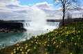 The Niagara River and horseshoe falls and wild flower Royalty Free Stock Photo