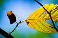 Nice autumn leafs Royalty Free Stock Image