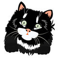 Nice black kitty on white Royalty Free Stock Photo