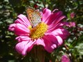 Nice Butterfly On The Flower