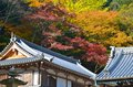 Nice color in maples autumn shrine japan all colors Stock Photography
