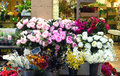 Nice flowers in the street market outdoor flower france Stock Images