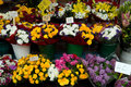 Nice flowers in the street market outdoor flower france Stock Photos