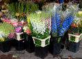 Nice flowers in the street market outdoor flower france Royalty Free Stock Photo
