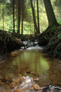 Nice forest river Royalty Free Stock Photo