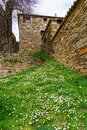 Nice garden of wild flowers and daisies next to old stone house. La Hiruela Madrid