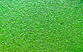 Nice green duckweed Royalty Free Stock Photo