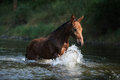 Nice horse with rope halter playing in the water brown Royalty Free Stock Image