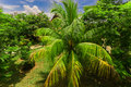 Nice inviting view of fluffy palm tree in tropical garden on sunny summer day