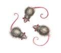 Nice mice a hand drawn watercolor illustration of three cute cartoon Stock Photos