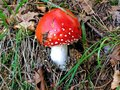 Nice mushroom in the mountains photo taken a time hiking wild mushrooms often delight eye Stock Photography