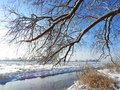 Beautiful tree near river in winter, Lithuania Royalty Free Stock Photo