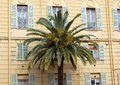 Nice palm tree against yellow building in city of france Royalty Free Stock Photos