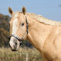 Nice palomino horse looking at you in autumn Royalty Free Stock Photos