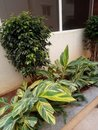 Nice Plant With Tiny Leaf And ...