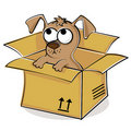 Nice puppy in box Royalty Free Stock Photos