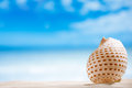 Nice seashell with ocean beach and seascape niceseashell shallow dof Stock Image