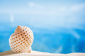 Nice seashell with ocean beach and seascape shallow dof Stock Images