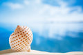 Nice seashell with ocean beach and seascape shallow dof niceseashell Royalty Free Stock Photos
