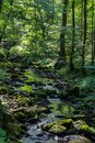 Nice small brook in forest with trees, Czech republic