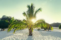 Nice small palm tree on a white paradise sand beach Royalty Free Stock Photo