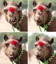 Nice smile elegant camel. Royalty Free Stock Photo