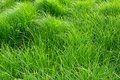 Nice texture and pattern of summer green grass nearby the river lake uvac at pester plateau in serbia pester plateau is a Stock Photo