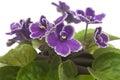 Nice Violet Flower
