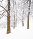 Nice winter scene Stock Photos