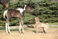 Nice young dog playing with foal outside Royalty Free Stock Photography