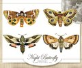 night butterfly watercolor hand drawn illustration Royalty Free Stock Photo