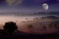 image photo : Night dream