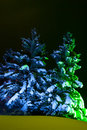 Night Fir-tree Stock Photography