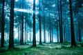Night forest Royalty Free Stock Photography