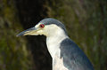 Night heron closeup view Stock Photos