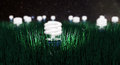 Night light growing some green bulbs Royalty Free Stock Image