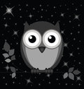 Night owl against a starry black sky Stock Photo