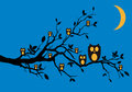 Night owls on tree,  Stock Images