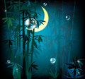 Night rainforest Stock Photo
