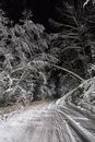Night road in winter forest snow falls on a the Royalty Free Stock Image