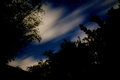 Night sky with clouds and stars looking up at the through trees are blurred from long exposure giving them a mist like quality Royalty Free Stock Photography