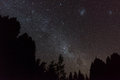 Night sky with millions of stars and milky way in new zealand clear gallaxies above silhouettes trees Royalty Free Stock Images