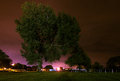 Night tree set in a park with the sky coloured with the urban glow of street lamps and industrial lights casting shadows in the Royalty Free Stock Images