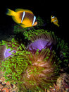 Night underwater life Stock Photography