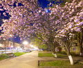 Night urban view with japanese cherry blossom Stock Images