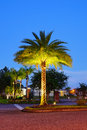 Night view of a palm tree Royalty Free Stock Photo